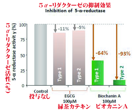 5α-リダクターゼ活性度